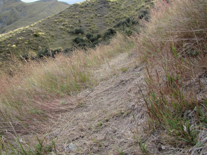 Typical outsloped sidle track - ouch